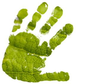 green-hand